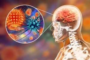 Gefahr durch das Herpesvirus im Gehirn