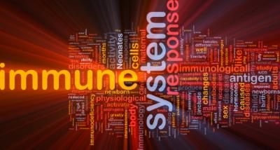 Immunsystem bei Herpes